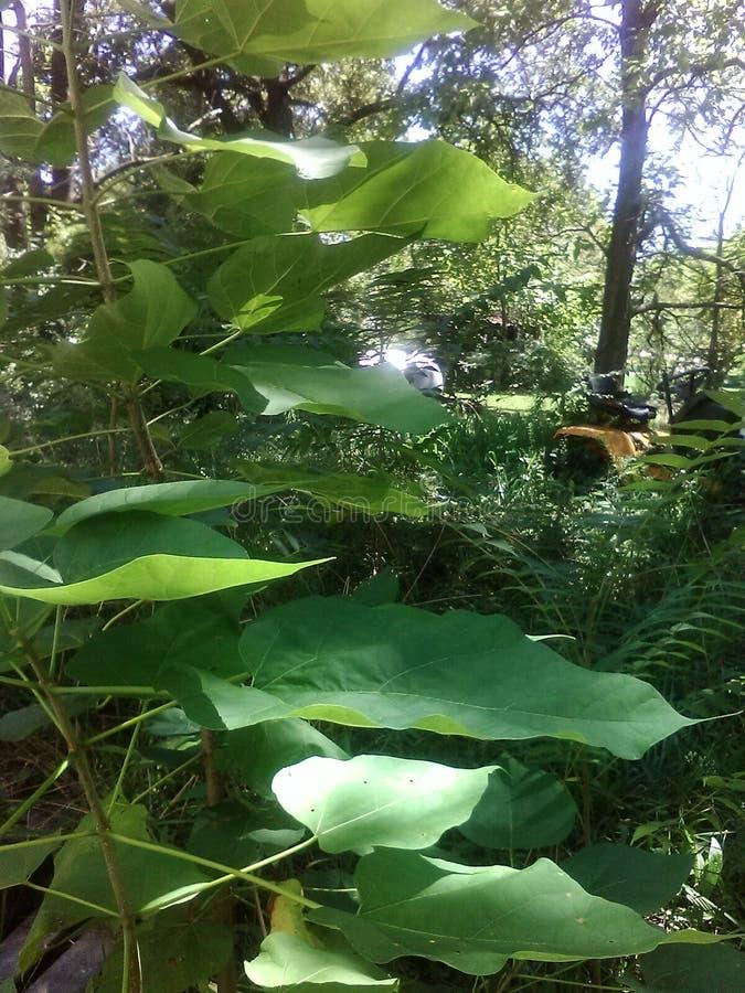 Pflanzen stockfotos