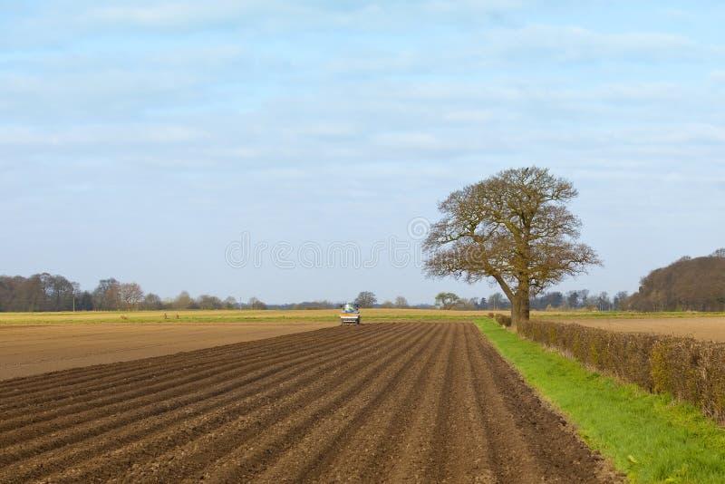 Pflanzen der Kartoffeln stockfoto