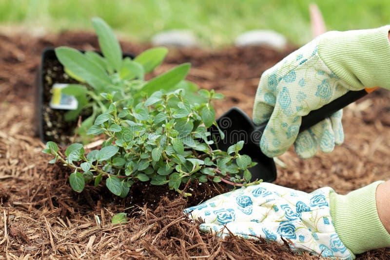 Pflanzen der Kräuter lizenzfreie stockfotografie