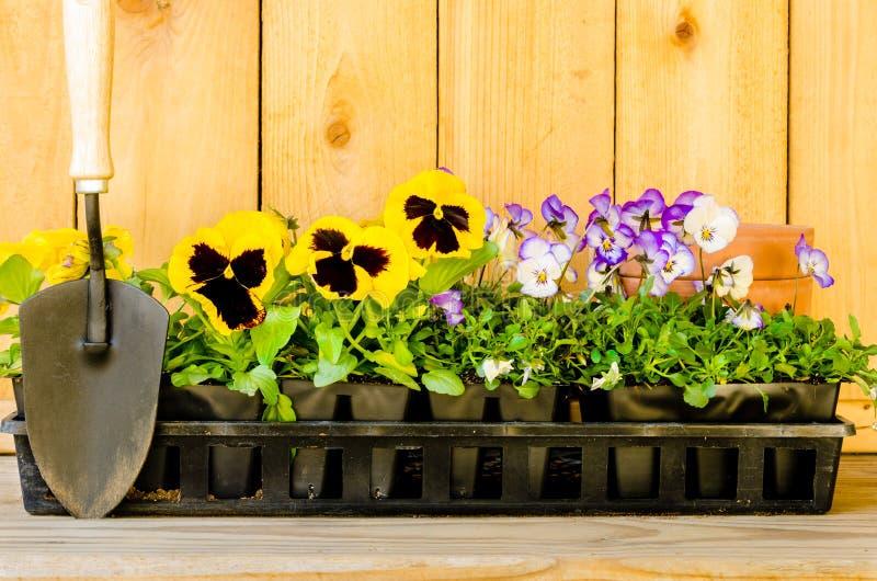 Pflanzen des Gartens stockfotografie