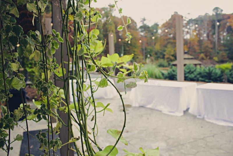 Pflanzen an einer Hochzeitseinstellung lizenzfreies stockfoto