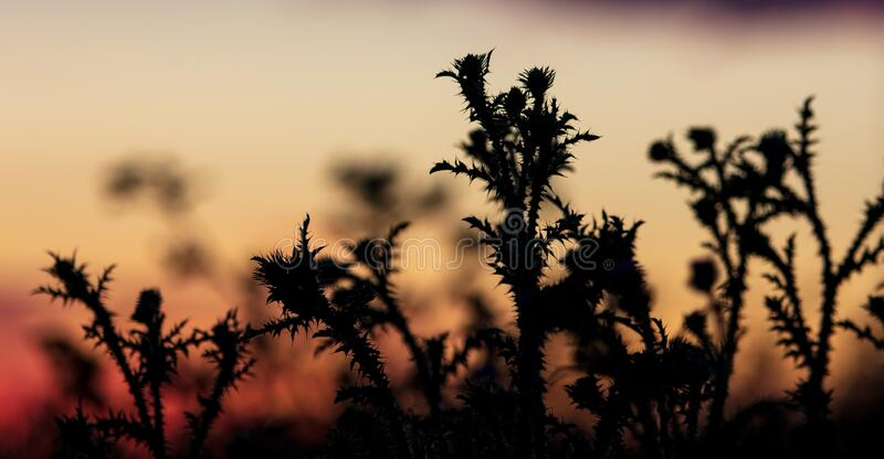 Pflanzen im Feld bei Sonnenuntergang stockfotografie
