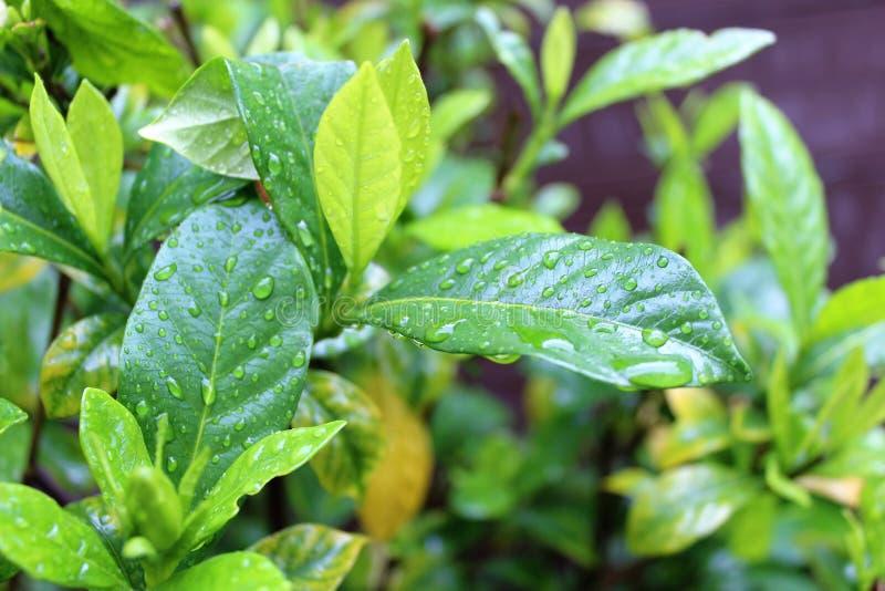 Pflanzen nach Regen lizenzfreie stockbilder