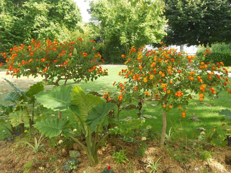 Pflanzen Sie Blumensommerparkgarten Natur-Jahreszeitwetter stockbilder