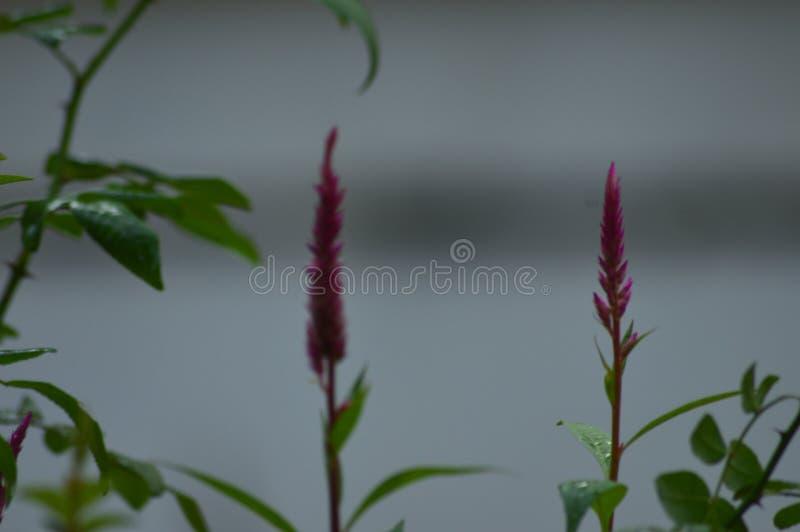 Pflanzen und Blumen lizenzfreie stockfotos