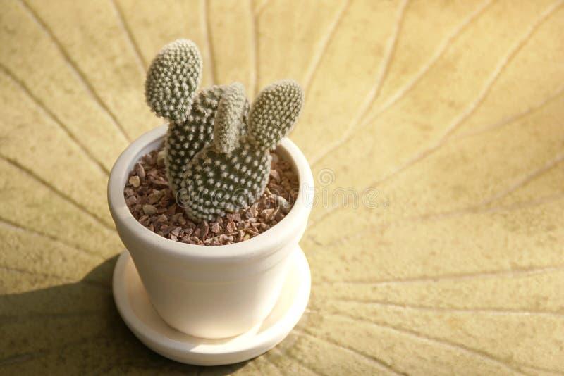 Pflanzen von Clay Pot des Opuntie-Kaktus auf Couchtisch stockfotos