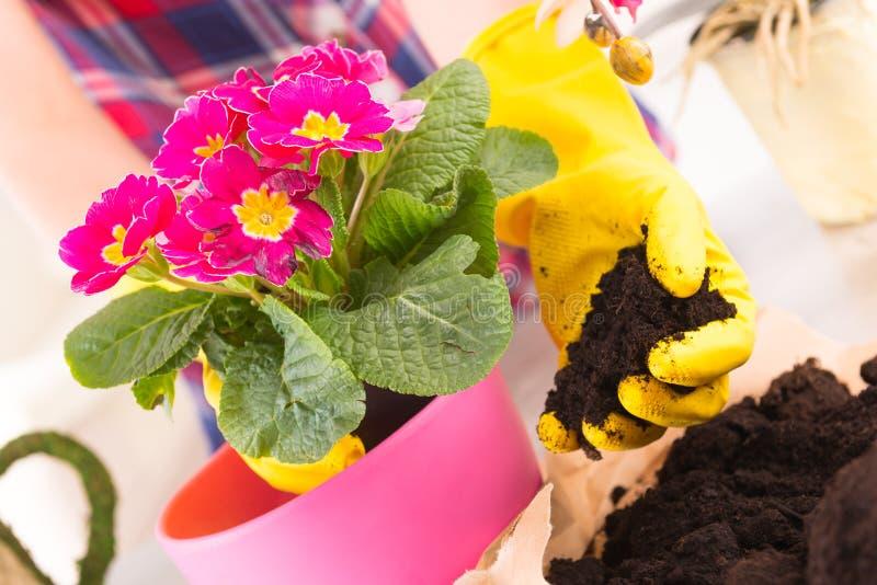 Pflanzen von colorfull Blume in einem Blumentopf stockfotografie