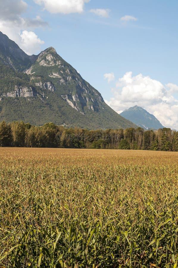 Pflanzen von Getreide lizenzfreie stockfotografie