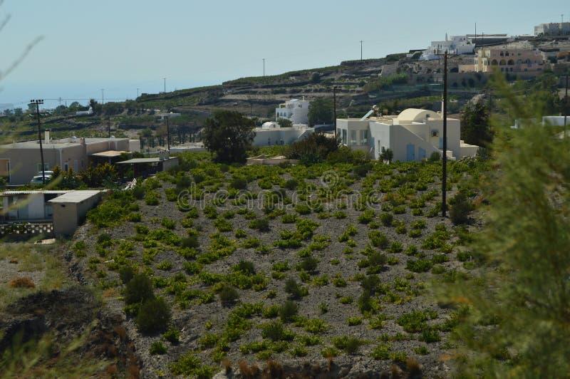 Pflanzen von Weinbergen auf der vulkanischen Erde in Pyrgos Frucht-Anlagen, Natur, Landschaften, Reise lizenzfreies stockfoto