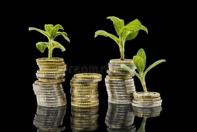 Pflanzen wachsen aus gestapelten Geldmünzen auf schwarzem Hintergrund stockfotografie