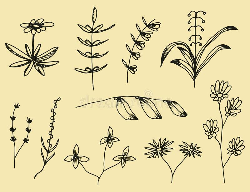 Pflanzenblätter eingestellt von den botanischen von Hand gezeichneten Vektorzeichnungen Vintag vektor abbildung