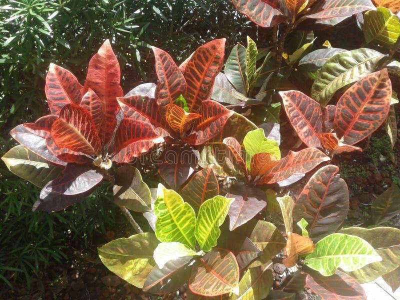 Pflanzenblätter und Büsche ybor Stadt tamps Florida lizenzfreie stockfotos