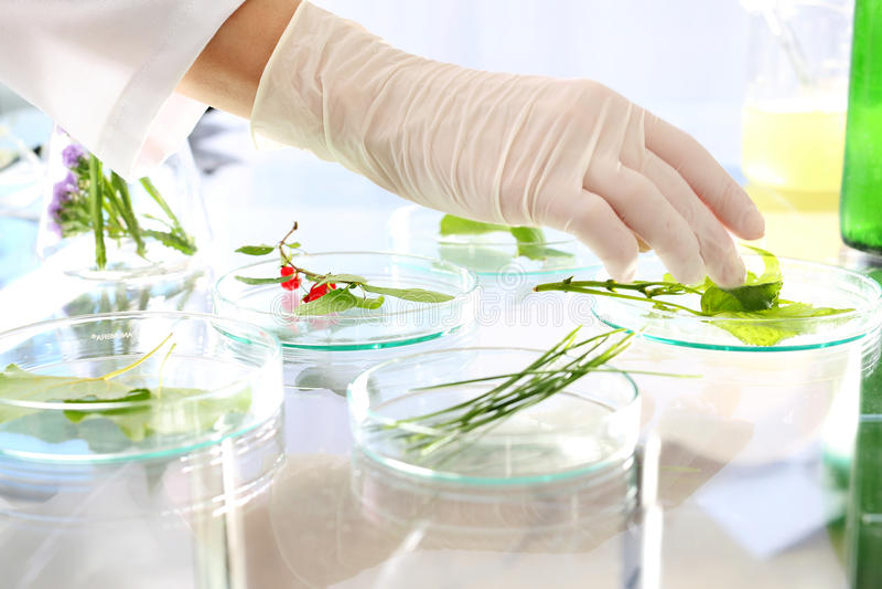 Pflanzenvermehrung stockbild
