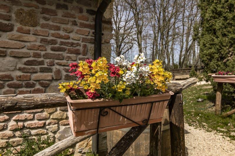 Pflanzervase, der von einem Zaun mit den roten, weißen und gelben Blumen hängt stockfotos
