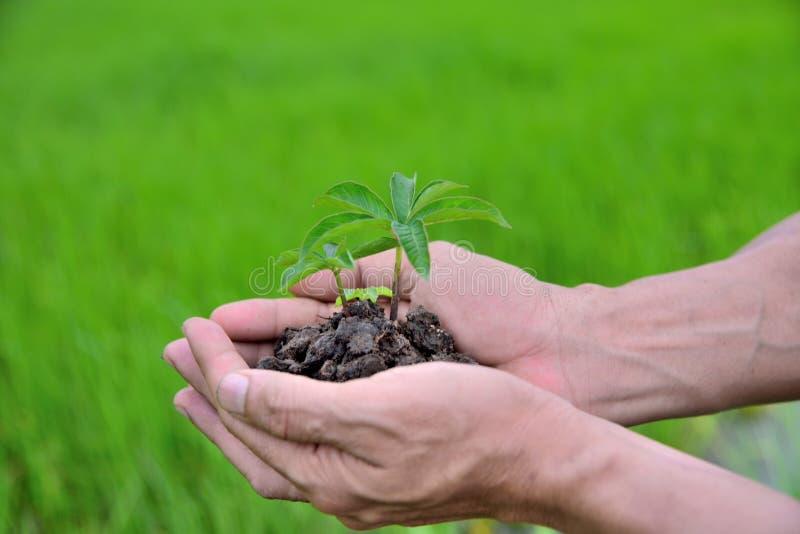Pflanzt die Landwirtschaft Wachsende Anlagen Pflanzt Sämling Die Hände, die junges Baby ernähren und wässern, pflanzt das Wachsen stockbilder