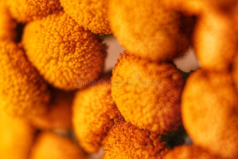 Download Pflanzt Kleines Speziesgelb Stockbild - Bild von klein, gelb: 96927695