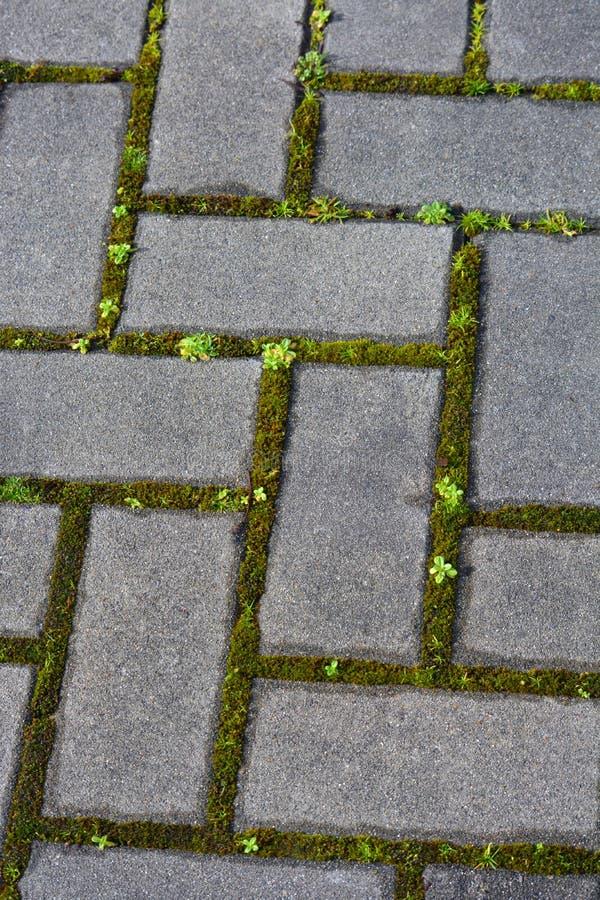 Pflastersteine mit Moos und Vegetation in den Sprüngen lizenzfreie stockfotografie