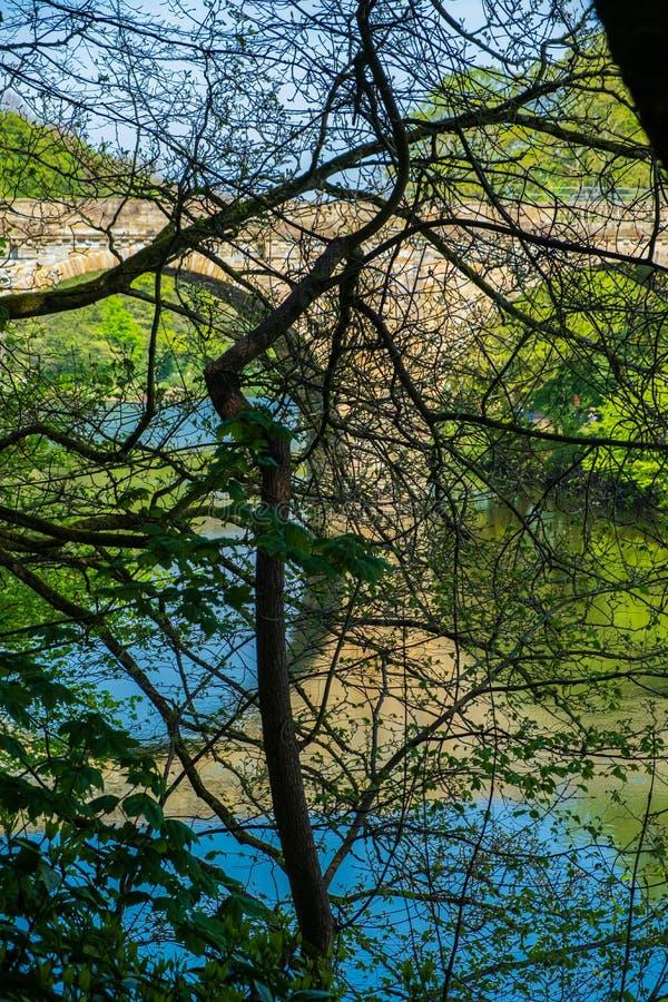 Pfründe-Brückenüberfahrt Fluss-Abnutzung hinter Baumasten in Durham, England lizenzfreies stockfoto