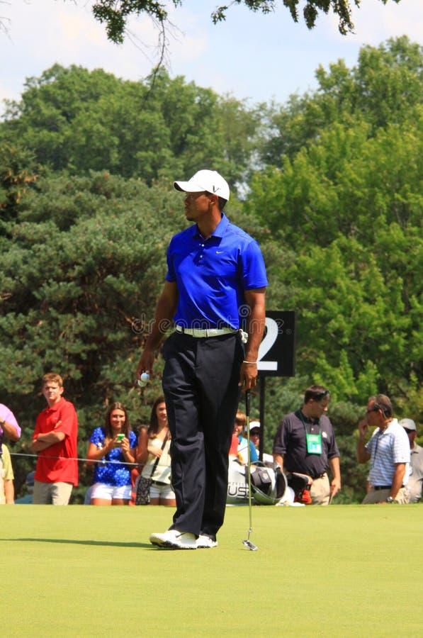 PGA golfisty tygrysa drewna obrazy royalty free