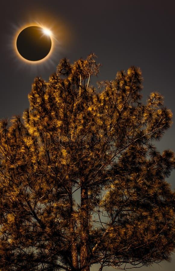 Phénomène naturel scientifique Éclipse solaire totale rougeoyant sur la SK image libre de droits