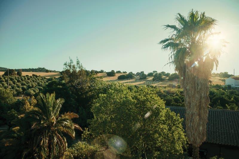 Τοπίο με τους φοίνικες στο ηλιοβασίλεμα στοκ φωτογραφία με δικαίωμα ελεύθερης χρήσης