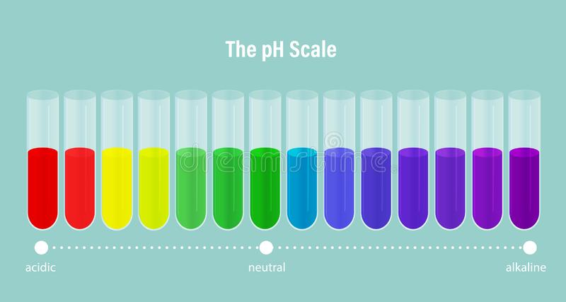 The pH scale. ph alkaline, neutral and acidic scale. Vector illustration of specifying the acidity of an aqueous solution. The pH scale. ph alkaline, neutral and stock illustration