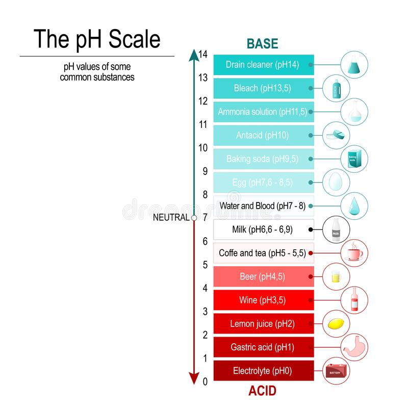 PH scale. Vector diagram. PH scale with pH values of some substances. Vector diagram royalty free illustration