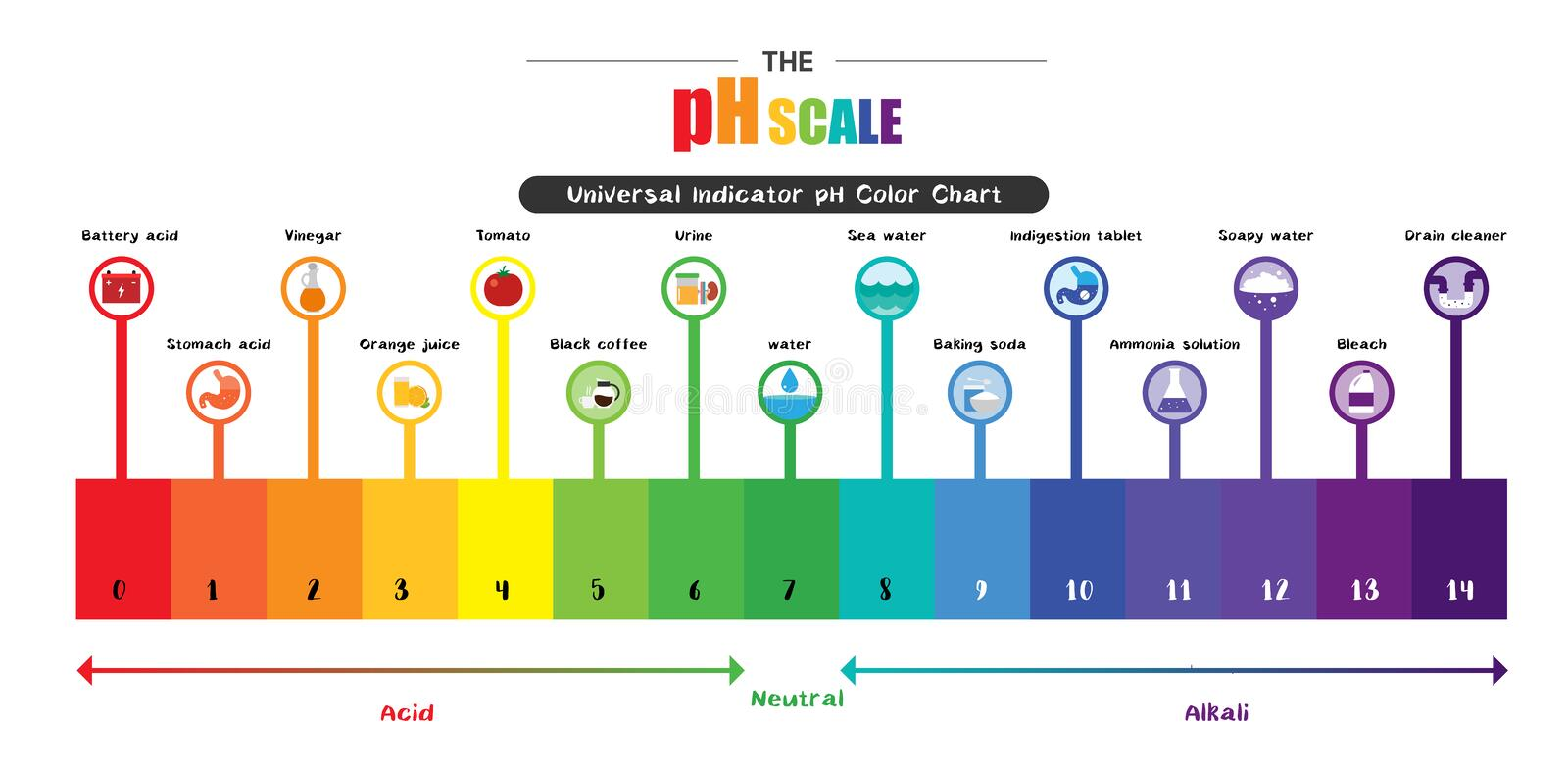The pH scale Universal Indicator pH Color Chart diagram. Acidic alkaline values common substances vector illustration flat icon design Colorful vector illustration