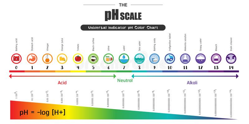 The pH scale Universal Indicator pH Color Chart diagram. Acidic alkaline values common substances vector illustration flat icon design Colorful stock illustration