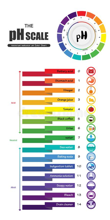 The pH scale Universal Indicator pH Color Chart diagram vector illustration