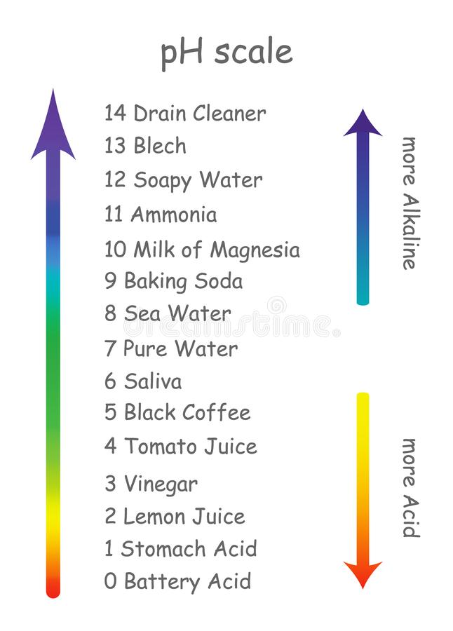 Ph schaal met productnamen met verschillende zuurheid De schaal wordt geschikt in de vorm van een pijl van alkalisch vector illustratie