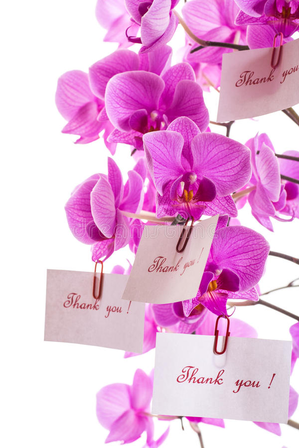 Download Thank you ! stock photo. Image of cards, flowers, bouquet - 32889352