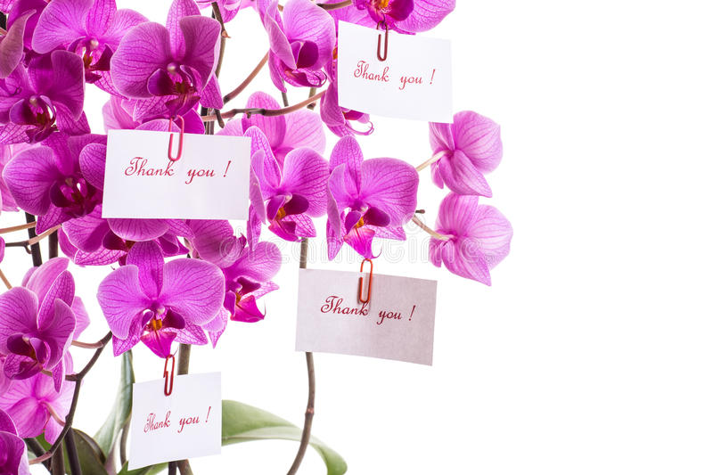 Download Thank you ! stock photo. Image of floral, flora, decoration - 32889414