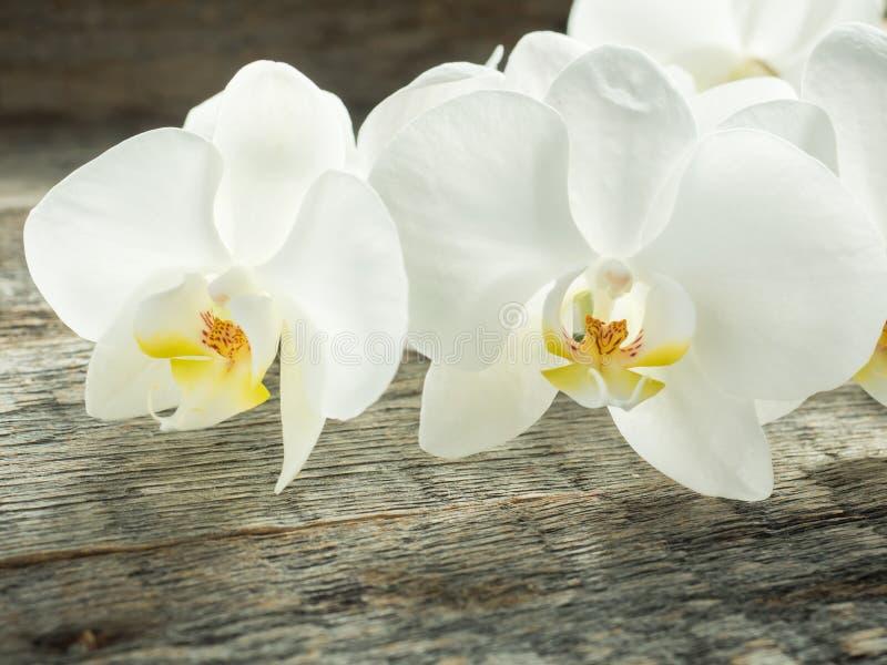 Phalaenopsis bianca dell'orchidea su un primo piano di legno del fondo fotografia stock