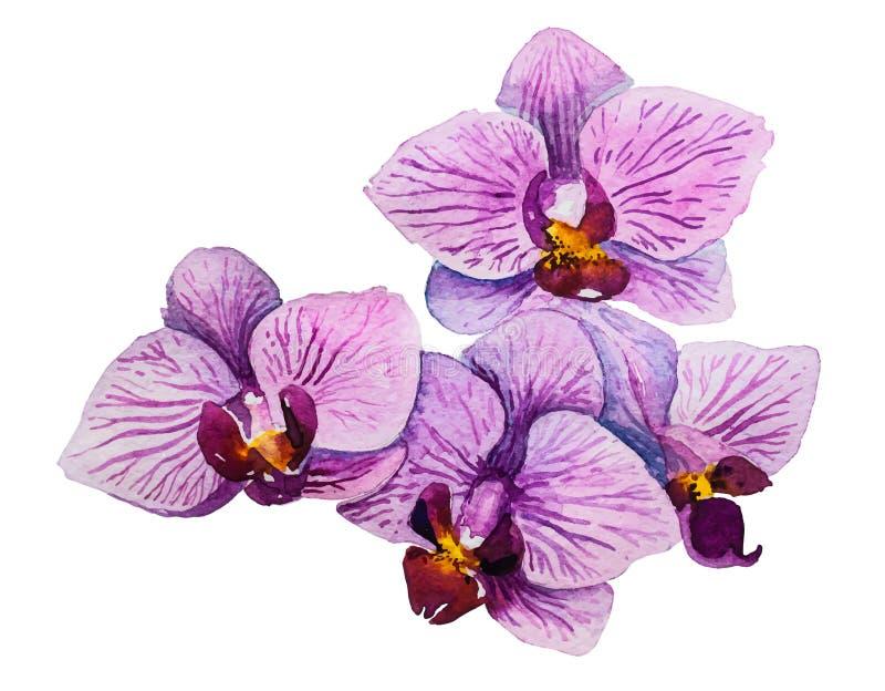 Phalaenopsis de la orquídea Ejemplo floral de la acuarela stock de ilustración