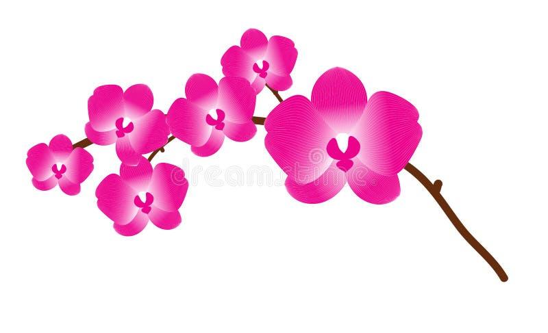 Phalaenopsis dell'orchidea royalty illustrazione gratis