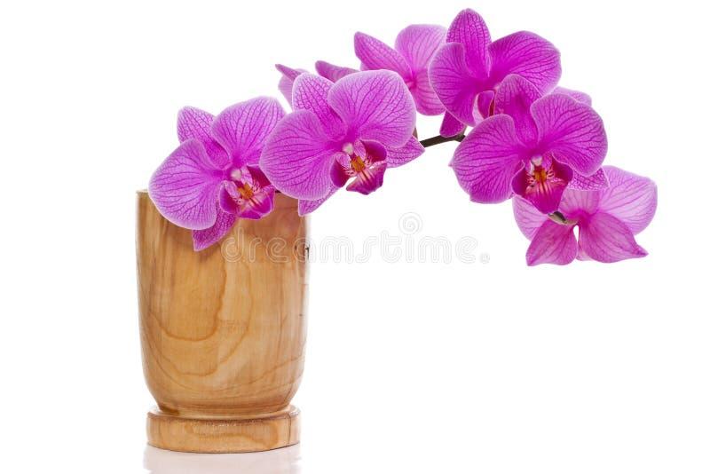 Phalaenopsis flowers stock image