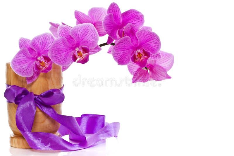 Phalaenopsis flowers royalty free stock photography
