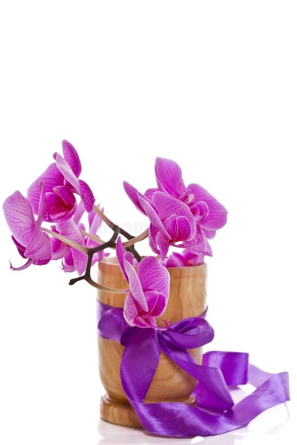 Phalaenopsis kwiaty obraz royalty free