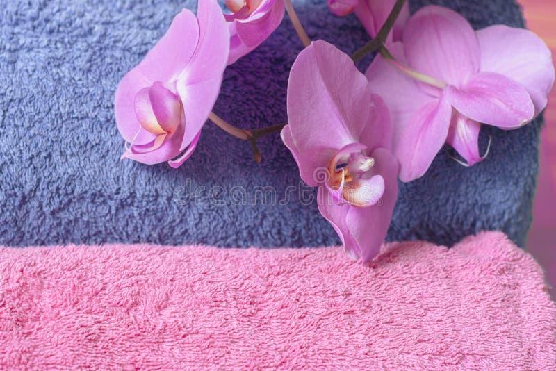 Phalaenopsis macio de toalhas e de orquídeas de terry no rosa imagem de stock royalty free