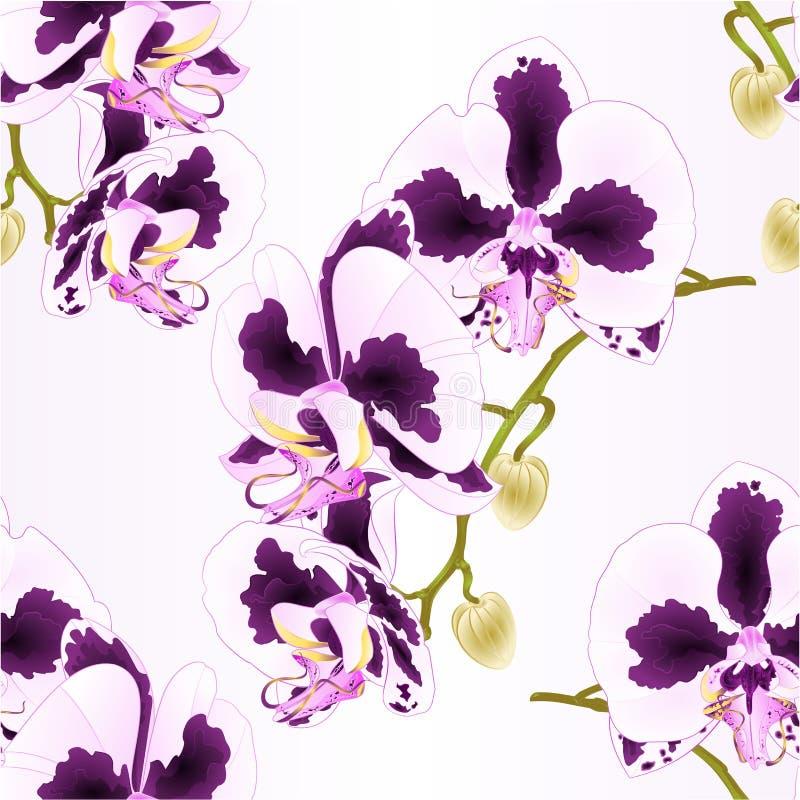 Phalaenopsis sans couture d'orchidée de tige de texture avec des taches pourpres et des fleurs blanches et des plantes tropicales illustration stock