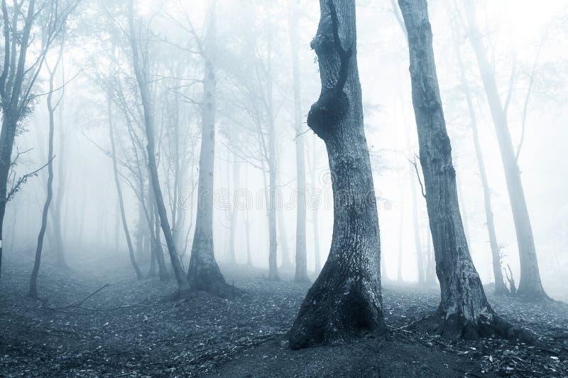 phantomatic konstigt för mörk dimmaskoglampa royaltyfria bilder