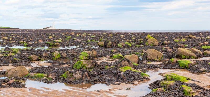 Phare du ` s de Whitley Bay et de St Mary images libres de droits
