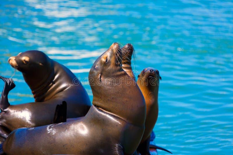 Phare et joints la Californie de San Francisco Pier 39 photographie stock