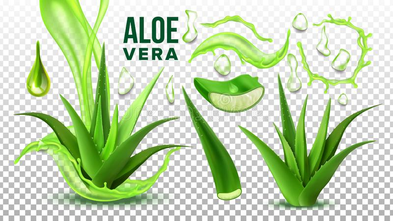 Pharmacy Succulent Aloe Vera Elements Set Vector. Realistic Medicinal Succulent Plant Leaves Cuttings And Juice Drops Elements Collection On Transparent royalty free illustration