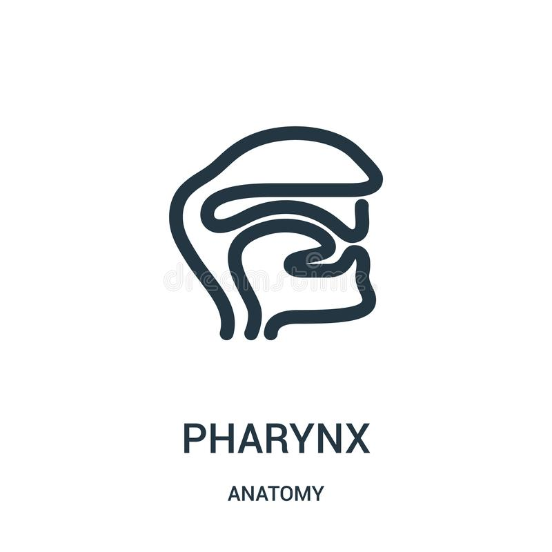 pharynx icon vector from anatomy collection. Thin line pharynx outline icon vector illustration. Linear symbol for use on web and royalty free illustration