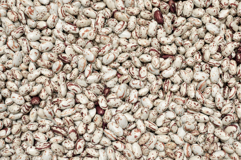 Phaséolus beans fresh crop royalty free stock photography