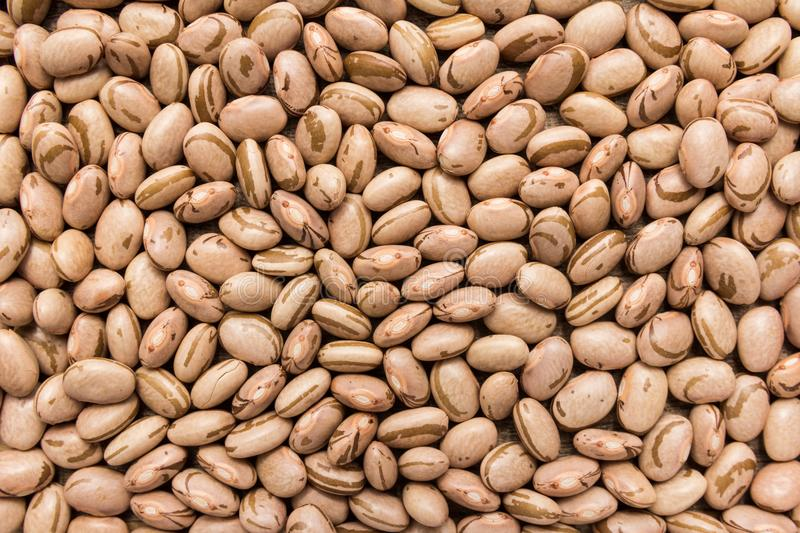 Pinto Bean legume. Closeup of grains, background use. Phaseolus vulgaris is scientific name of Pinto Bean legume. Also known as Frijol Pinto and Feijao Carioca royalty free stock photography