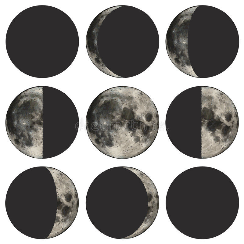 Phases of the moon vector illustration. Detailed vector illustration of the phases of the moon vector illustration