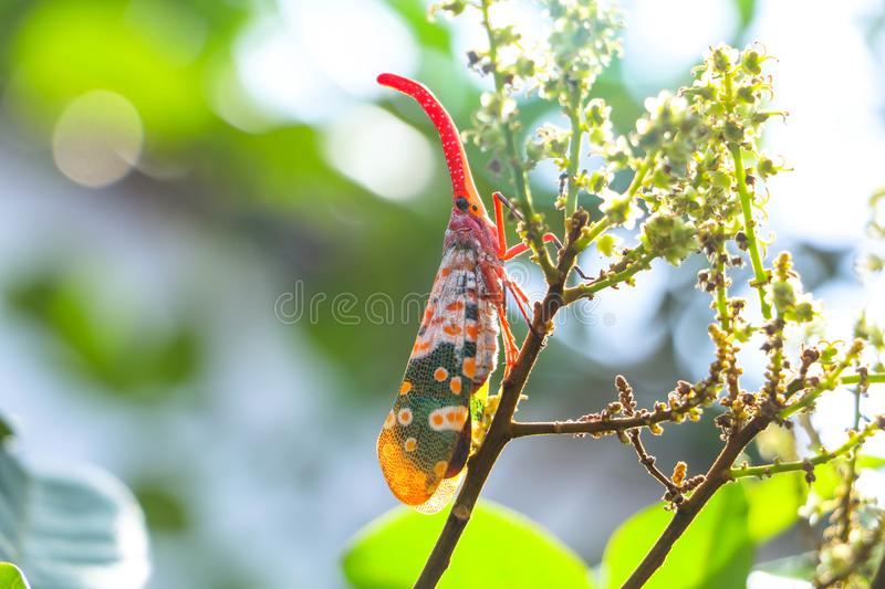 Pheasant insects on the tree. stock images